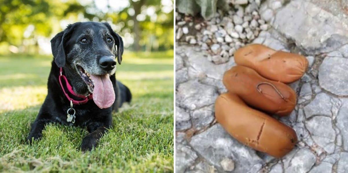 Άγνωστοι έριξαν δεκάδες φόλες στον λόφο Φιλοπάππου – Σκυλιά στο χειρουργείο