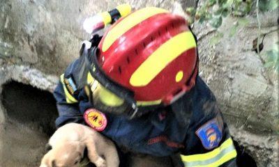 Κρήτη: Πυροσβέστες έσωσαν θηλυκό κουταβάκι από βέβαιο θάνατο