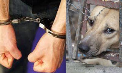 Μετατρέπεται σε κακούργημα ο βασανισμός ζώων
